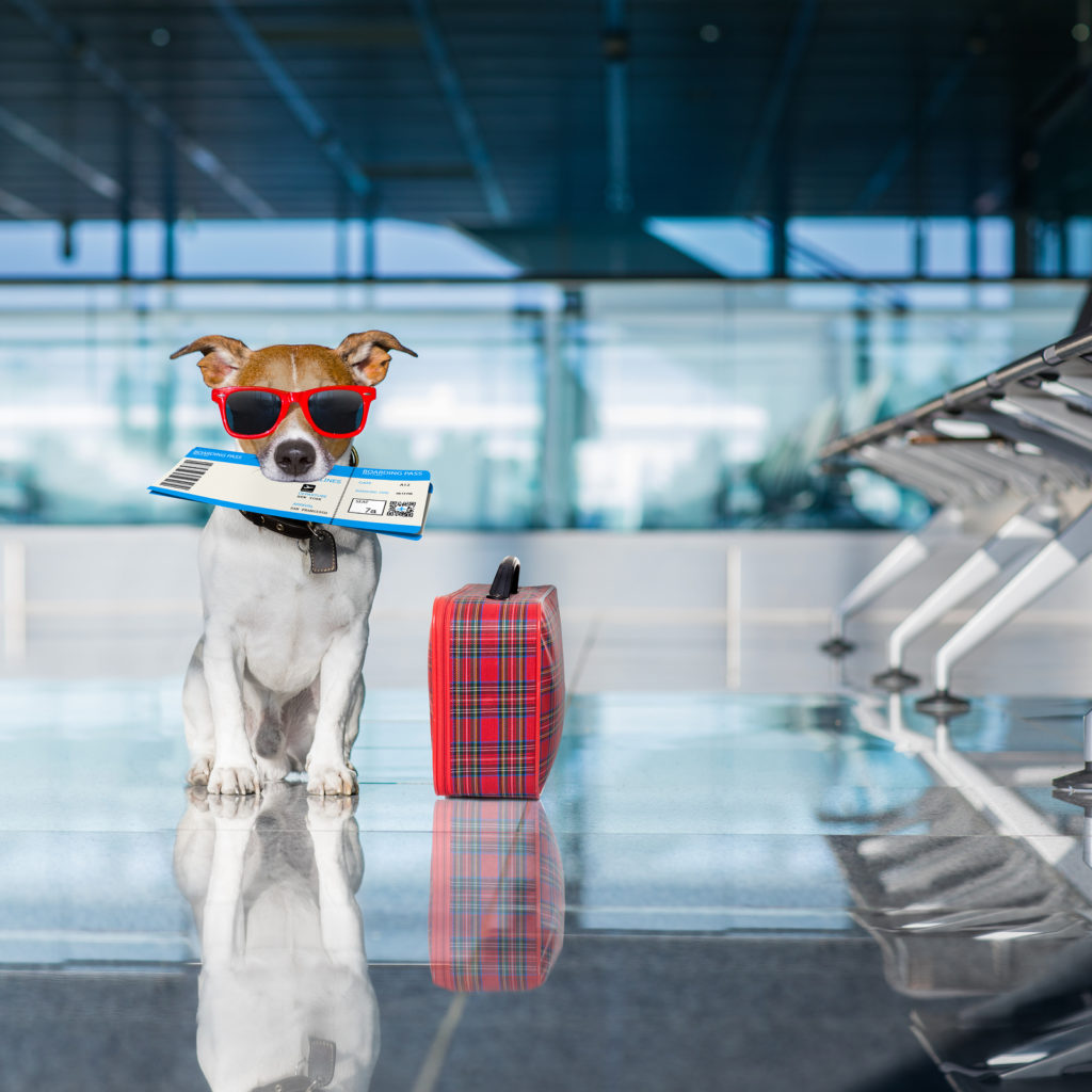 The Airline Pet Requirements You  Need to Know Before Traveling
