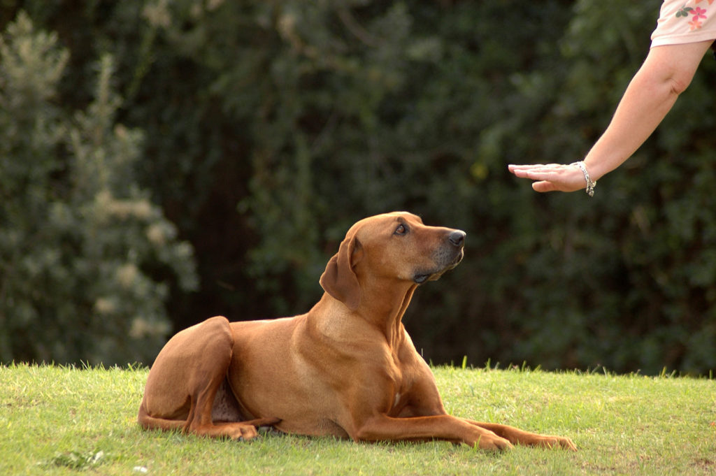 Eleven Rules of Pet Training