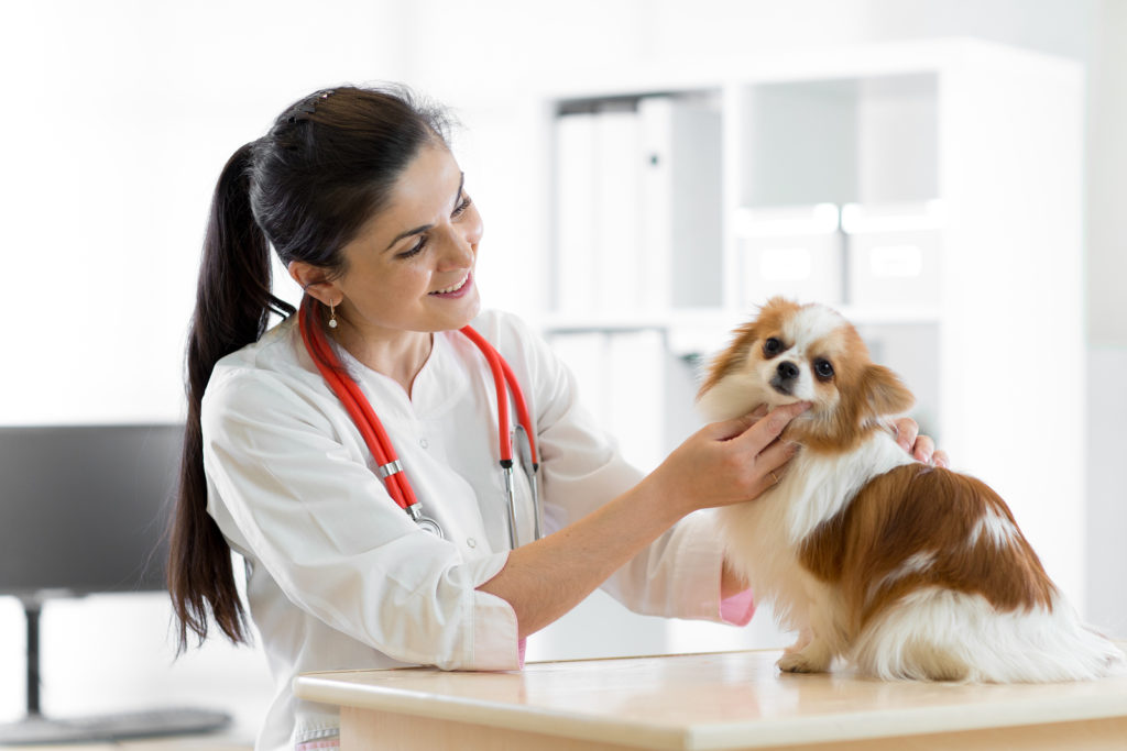 Chat with a Vet - Parvovirus Part 1 of 2: Diagnosing, Next Steps and Expenses