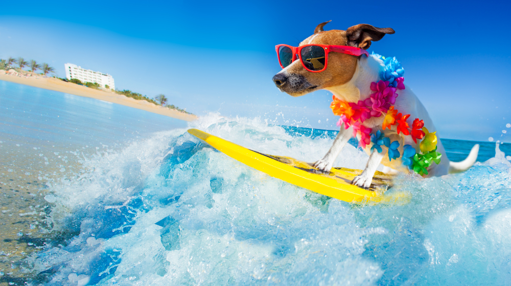Heat Stroke in Dogs: Causes and Prevention