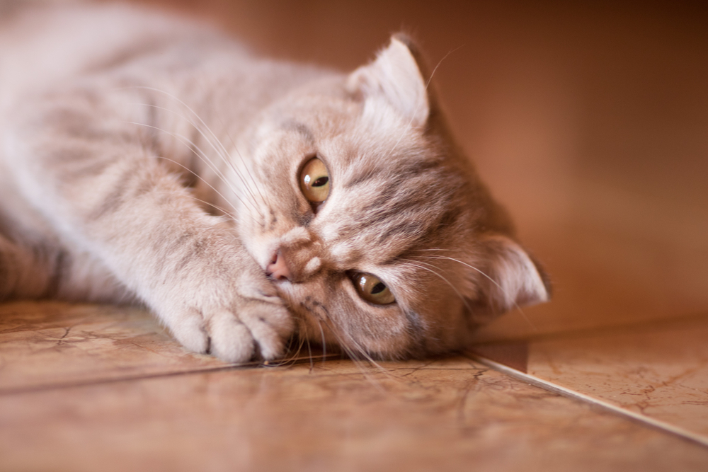 Signs and Symptoms of Cat Teeth Problems
